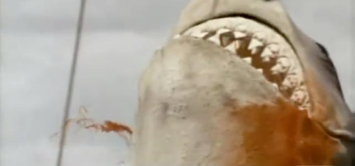 Jaws_4_The_Revenge_1_21_13