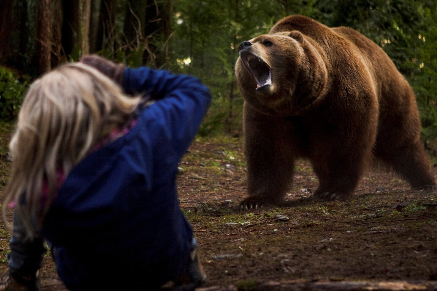 Endangered, Grizzly, Red Machine