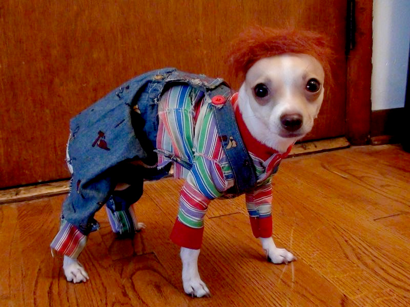 Dog Costumes Halloween & 8 Dogs Dressed as Your Favorite Horror Movie Characters! - Bloody ...