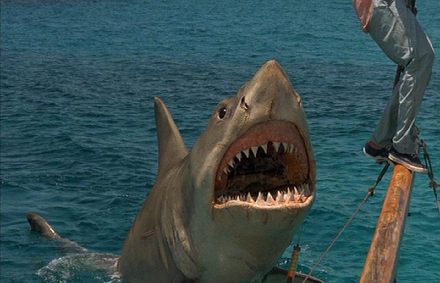 quotthat was a franchisequot � jaws bloody disgusting