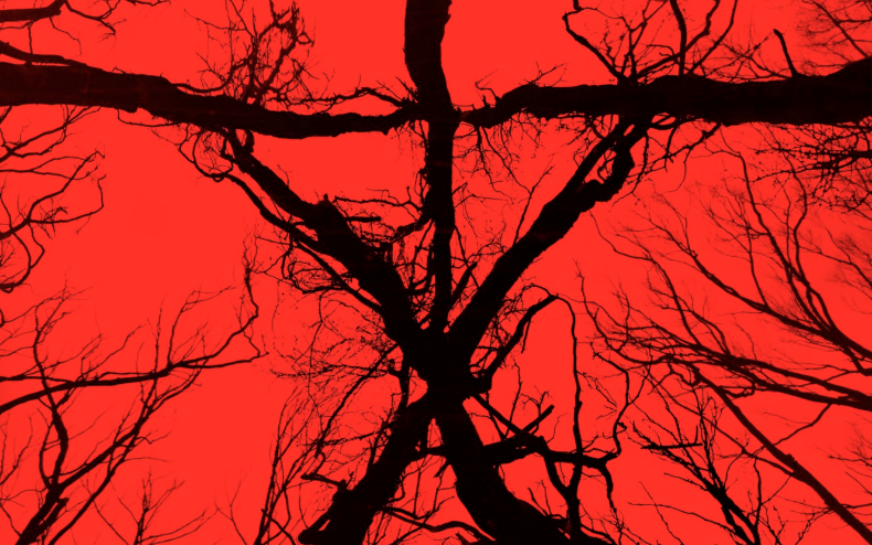 8 Things You Should Know Before Seeing Blair Witch Bloody Disgusting