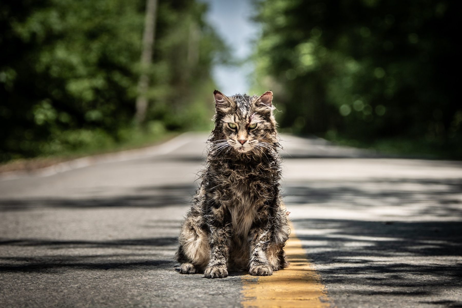 Paramount Releasing 'Pet Sematary' in 4DX Theaters for Immersive, Multi-Sensory Horror Experience - Bloody Disgusting