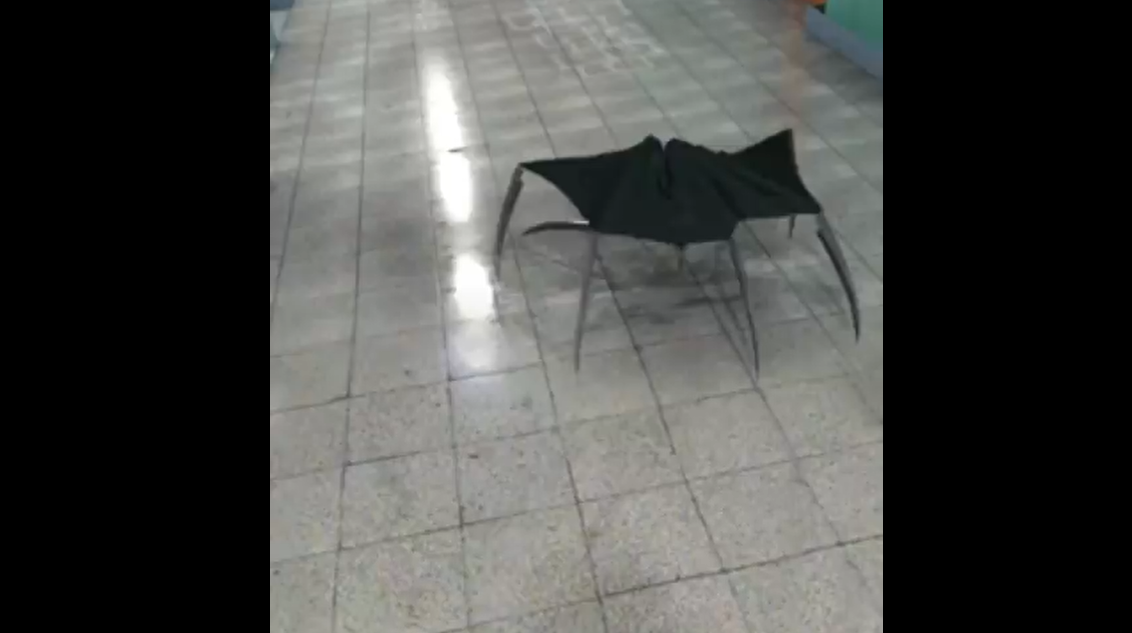 An Umbrella Turns Into A Deadly Monster